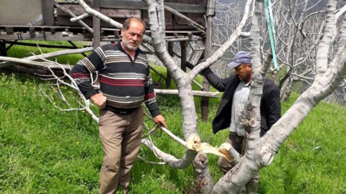 Dünyanın en kaliteli incirinin üretildiği bahçelere verilen zararı TEİAŞ görevlilerinin yaptığı ortaya çıktı