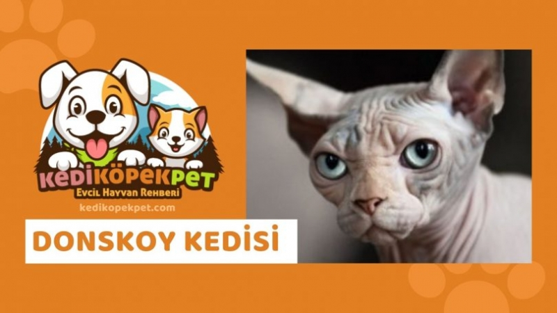 Evcil Hayvanların Hassasiyeti İçin Kedi Kopek Pet