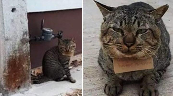 Evden kaçan kedi, üç gün sonra borçlu olarak döndü