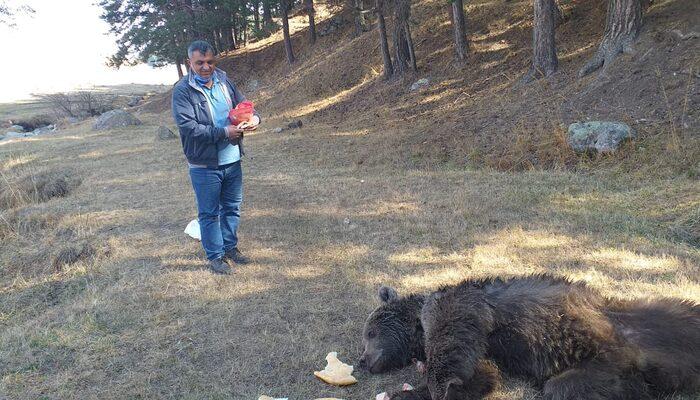 Kars'ta dikkat çeken görüntü! Yaralı boz ayıyı tavuk eti ile beslemeye çalıştılar