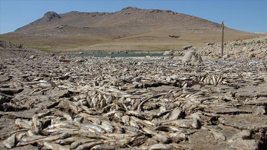 Ürküten manzara! Kuraklık, balık ölümlerine neden oldu