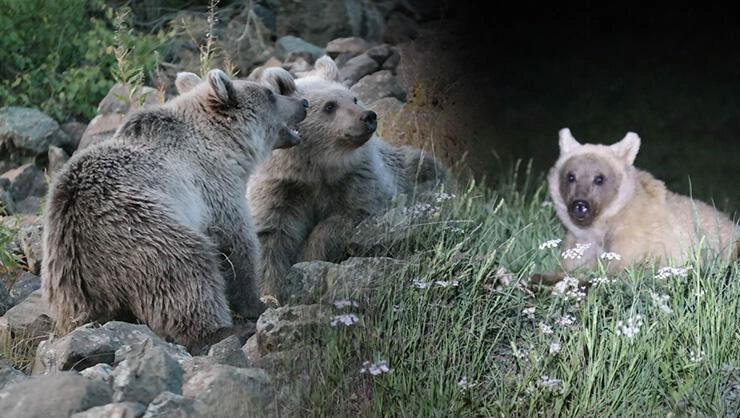 Uzman isimden yavru ayılarla ilgili uyarı: Vatandaşlar elleriyle...