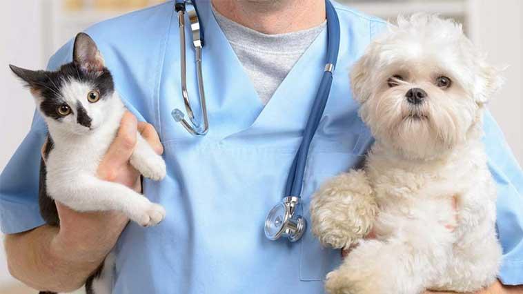 Veteriner Röntgen Masası Ne İşe Yarar?