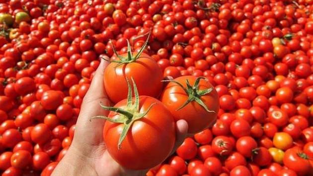 Seyirlik domates: Toptan satış fiyatı bile yüzde 140 arttı