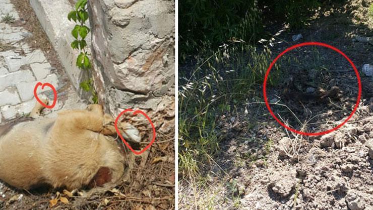 Son dakika: Kahreden görüntü! 1i başı kesik 2si toprağa gömülü...